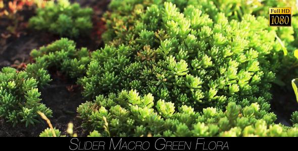Green Flora 5