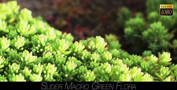 Green Flora 6