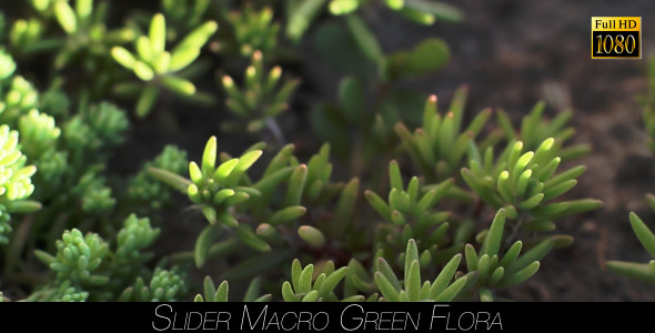 VideoHive Green Flora 8 11973481
