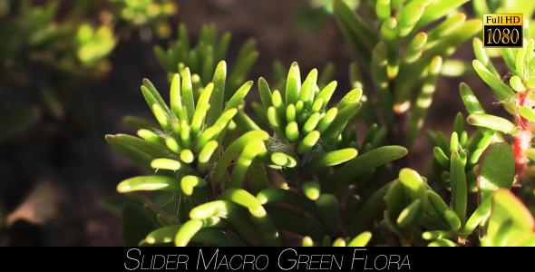 Green Flora 9