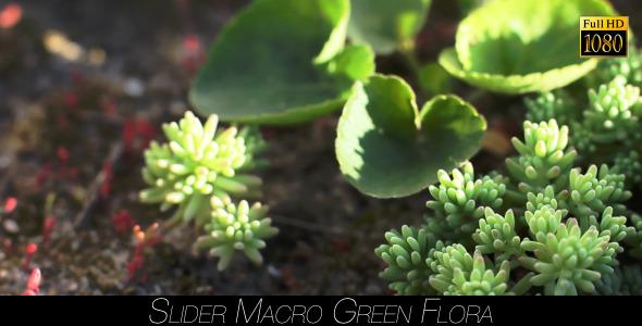 Green Flora 12