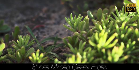 Green Flora 13