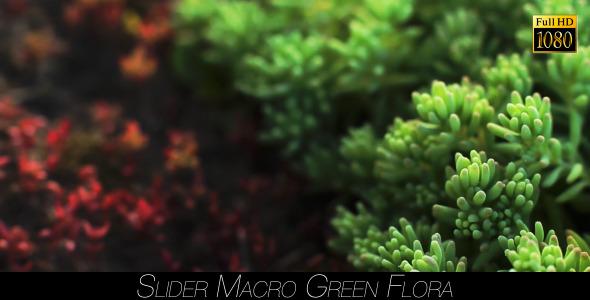 VideoHive Green Flora 18 11973887