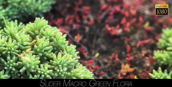 Green Flora 19