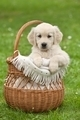 Small beautiful puppy - PhotoDune Item for Sale