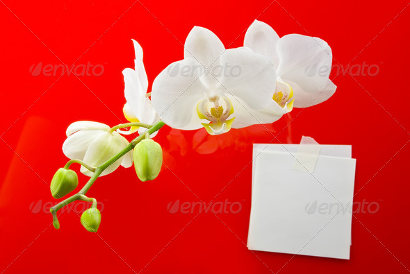 Orchid flower and note paper for your text - Stock Photo - Images
