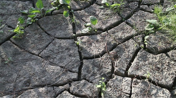 The Ground Cracked by Drought