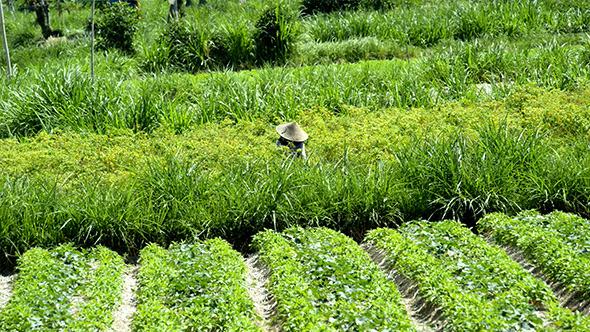 Farm Worker in Field