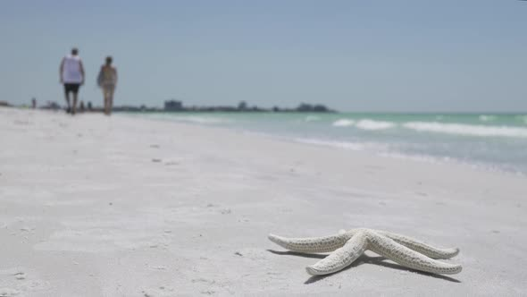 VideoHive Starfish On The Beach Of A Resort 12 Of 13 12008900