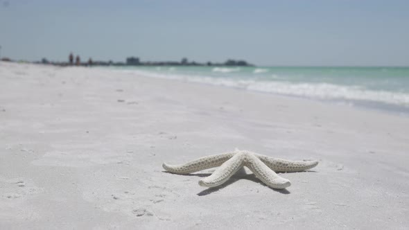 VideoHive Starfish On The Beach Of A Resort 2 Of 13 12008915