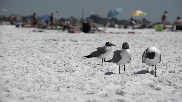 Birds On A Busy Beach 1 Of 13