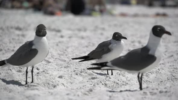 Birds On A Busy Beach 6 Of 13