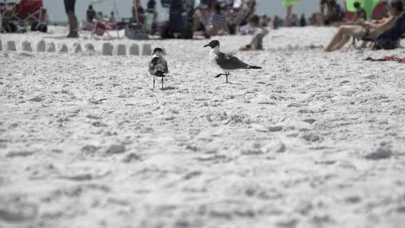 Birds On A Busy Beach 9 Of 13