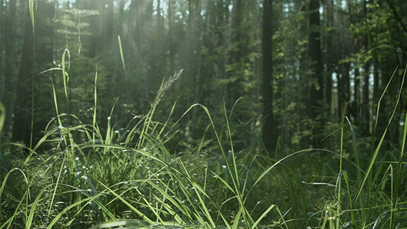 Forest Grass and Insects