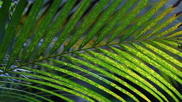Green Leaf In Nature 615