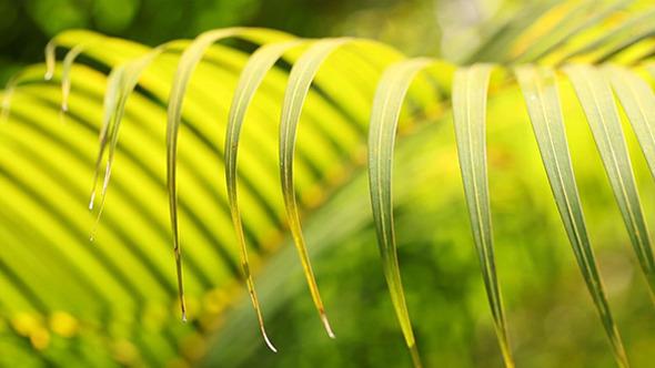 Green Leaf In Nature 614