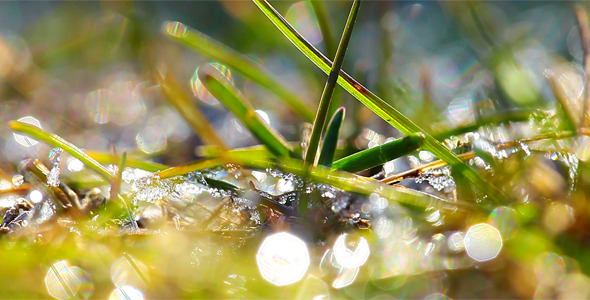VideoHive Green Grass And Dew Drops Frozen 2 12029411