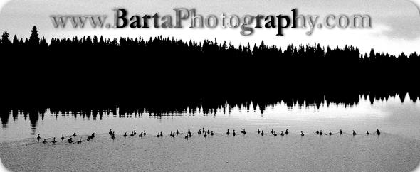 bartaphotography