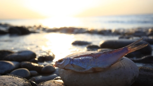 Dead Fish At The Beach After Some Environmental