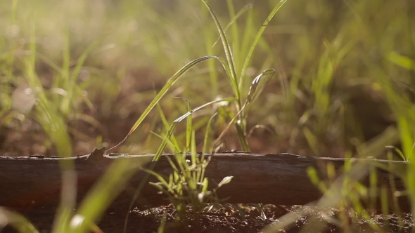 Wooden Stick Lays In Grass With Sunset On