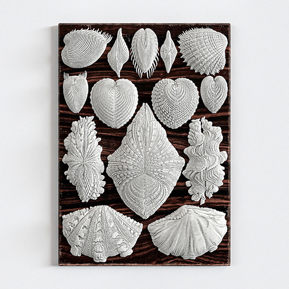 3DOcean Forms in Nature Wall Decor 12037922