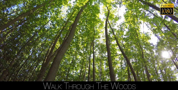 VideoHive Walk Through The Woods 25 12047910