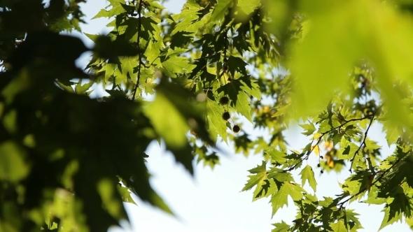 The Foliage Of a Tree