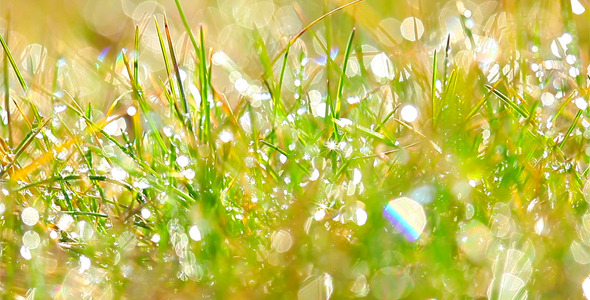 Drops Of Dew On A Green Grass 4
