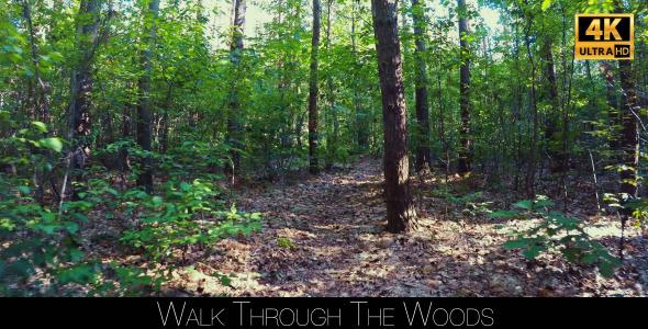 Walk Through The Woods 28