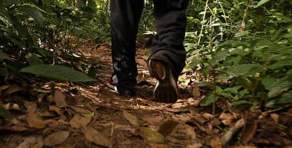 Man Feet Walking On Forest Trail