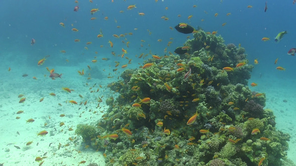 VideoHive Tropical Fish on Vibrant Coral Reef 12058845