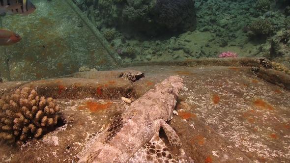VideoHive Crocodile Fish on Ship Wreck 12058867