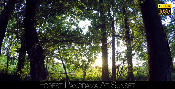 Forest Panorama At Sunset