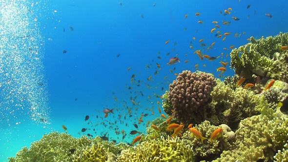 VideoHive Tropical Fish on Vibrant Coral Reef 12059222