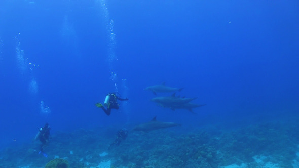 Flock of Dolphins Swims Near Divers