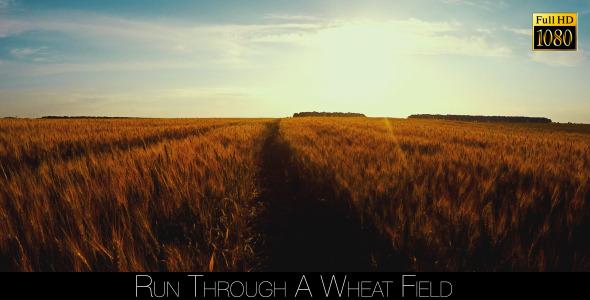 Run Through A Wheat Field