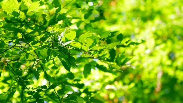 Forest Trees Leaf Nature Green Wood Sunlight