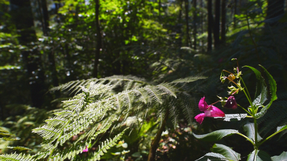 Ferns & Forest