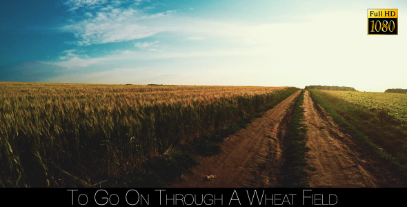 To Go On Through A Wheat Field 4