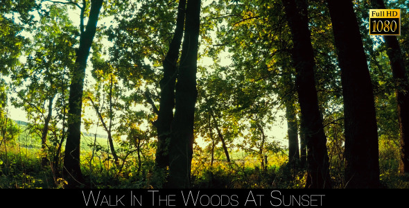 Walk In The Woods At Sunset 3