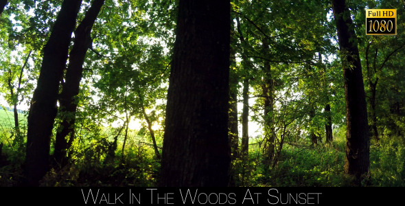 Walk In The Woods At Sunset 6