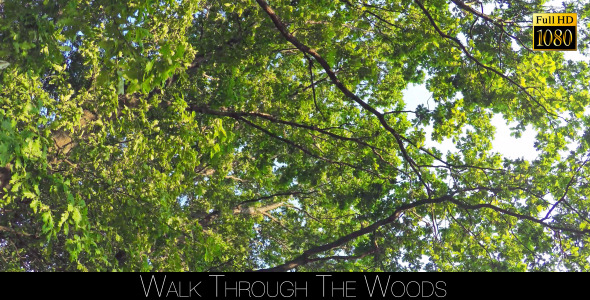 Walk Through The Woods 23