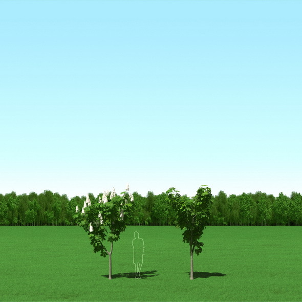 Blooming Chesstnut Castanea Free Trees 3D Models