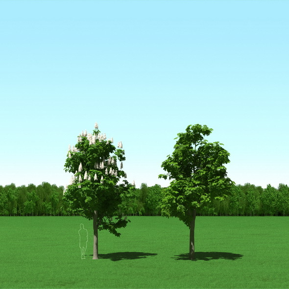 Blooming Chesstnut Trees Castanea 3D Models