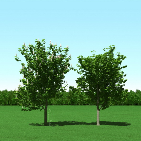 3DOcean Blooming Chesstnut Trees Castanea 3D Models 12087259