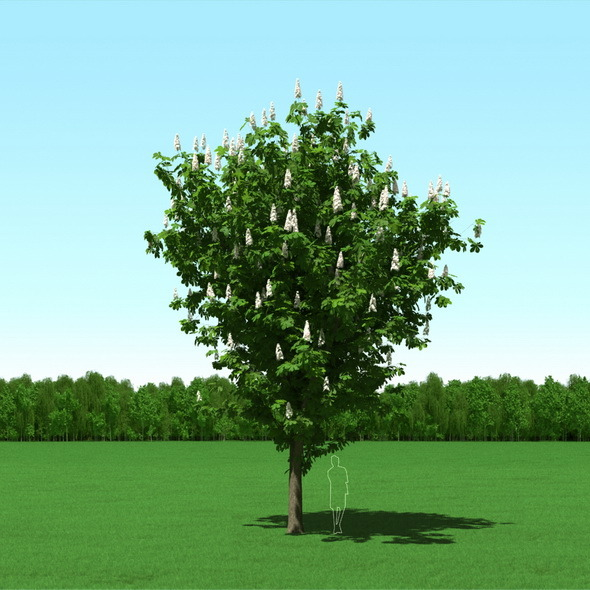 3DOcean Blooming Chesstnut Castanea Free Tree 3D Model 12087318