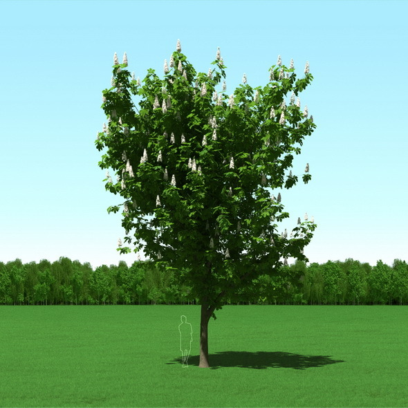 3DOcean Blooming Chesstnut Tree Castanea 3D Model 12087342