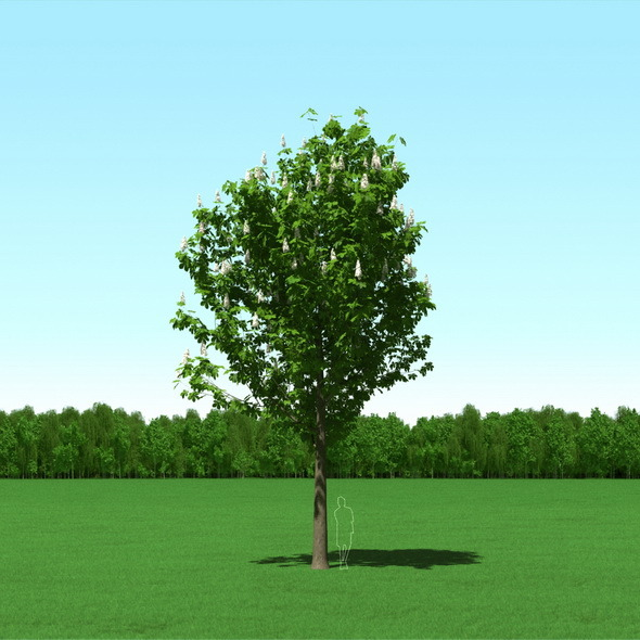 3DOcean Blooming Chesstnut Tree Castanea 3D Model 12087354