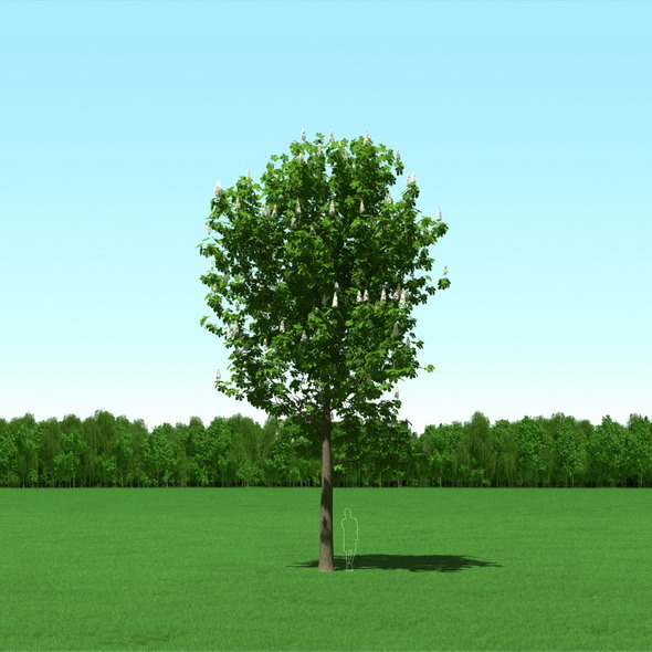 Blooming Chesstnut Tree Castanea 3D Model