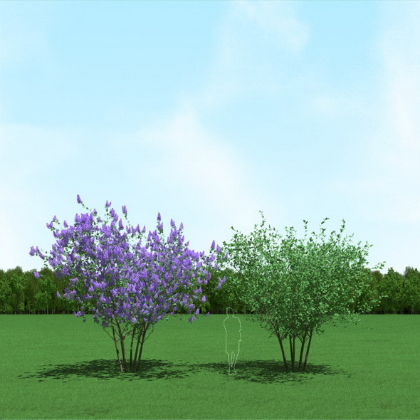 3DOcean Blooming Syringa Lilac Trees 3D Models 12088082